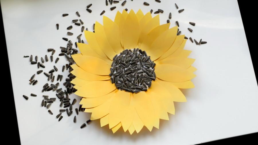Kwiat słonecznika – małe rączki kleją