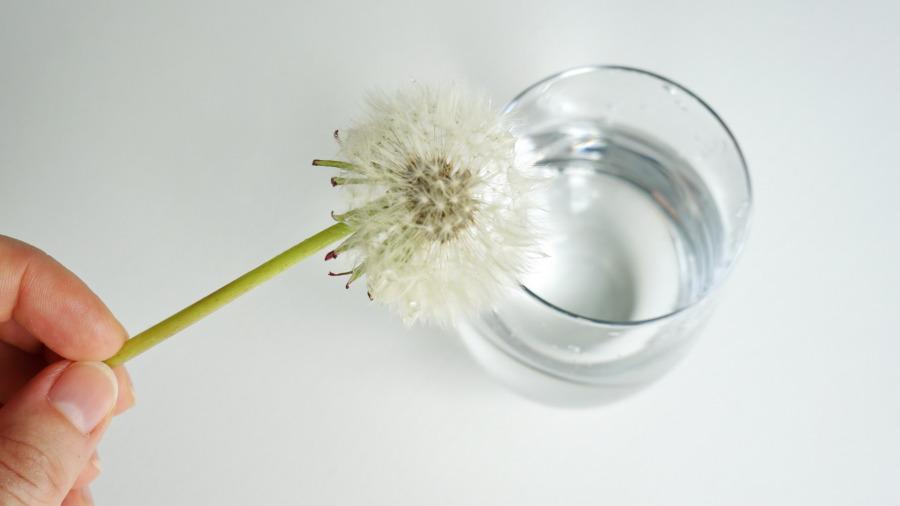 Kąpiel dmuchawca – eksperyment